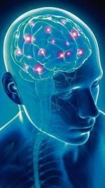 Mózgi kobiet i mężczyn się uzupełniają – podkreślają badacze