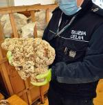 Pół tony koralowców przechwycili celnicy w lutym w Dorohusku. To rekordowy taki przemyt