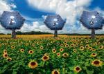 """To na razie tylko wizualizacja elektrowni słonecznych. Pierwsze prawdziwe """"słoneczniki"""" zaczną działać w przyszłym roku."""