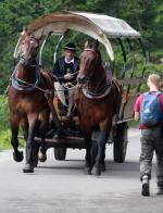 Zaprzęg konny w drodze do Morskiego Oka (lipiec 2014). Zdaniem posłów ścierany przez kopyta asfalt tworzy rakotwórczy pył