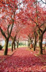 Jesień na Ziemi Lubuskiej  jest niezwykle kolorowa.