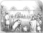 ≥W 1386 r. w normandzkim mieście Falais przed sądem stanęła trzyletnia maciora oskarżona o zamordowanie niemowlęcia. Był to jeden z licznych średniowiecznych procesów zwierząt