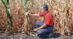 ≥W Polsce rolnik nie może ubezpieczyć się od suszy