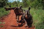 Ochrona przyrody w Afryce, Kenia