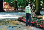 Woda opadowa zebrana wcześniej w odpowiednich zbiornikach może być wykorzystywana np. do podlewania zieleni miejskiej