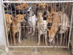 Utrzymywanie zwierząt w niewłaściwych warunkach bytowania to również przejaw znęcania się  nad nimi
