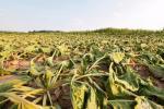 Zmiany klimatu  to już nie tylko problem branży rolno- -spożywczej. Wytyczne KE na temat raportowania klimatycznego z 2019 r. wymagają m.in. oceny wpływu ryzyk klimatycznych na model biznesowy, strategię  i finansowanie od spółek  ze wszystkich branż