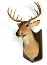 Gadający jeleń, Buck, Toys4boys.pl, 999 zł