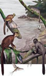 Kilka gatunków przodków  małp człekokształnych  i człowieka pojawiło się  w Afryce 39 mln lat temu