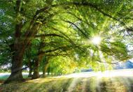Energia z natury