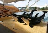 Virgin rezygnuje ze sprzedaży biletów do SeaWorld