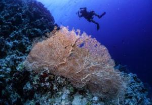 Kolorowe życie rafy koralowej w Szarm el-Szejk