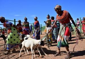 Afrykańskim nomadom niestraszna niegościnna ziemia