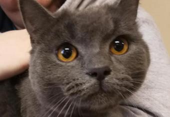 Prezydent przygarnął porzuconego kota