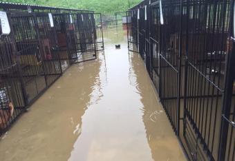 Szukają stałych domów dla psów z zalanego schroniska