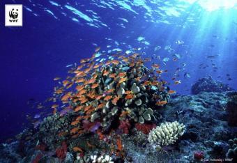 WWF: znikające zwierzęta