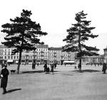 Stare sosny na placu Piłsudskiego. Nie pasowały do żadnej  koncepcji przestrzennej, ale były prawdziwe. Ich wycięcie wywołało liczne protesty
