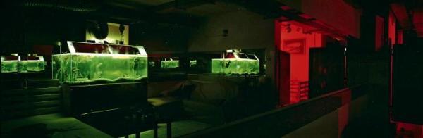 Zdaniem Pustoły darkroomy są naładowane emocjami, gorące. Tymczasem na pierwszy rzut okaz kompozycje wydają się niemal abstrakcyjne