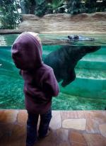 Nowo otwarta hipopotamiarnia przyciąga do zoo tłumy. Za bilet normalny trzeba zapłacić  16 zł. Przy transakcji  kartą dodatkowo prawie 2 proc. tej kwoty