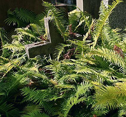 Zapuszczony grób kpt. Edmunda Tarasa- -Wołkowińskiego