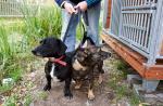 Najlepszą pomocą dla porzuconych psów jest ich adopcja – przekonują wolontariusze z Palucha