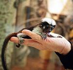 Małpka ma chore tylne łapki. Sprawność ma im przywrócić specjalna rehabilitacja