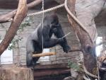 Fot.  Ewa Ziółkowska/Zoo
