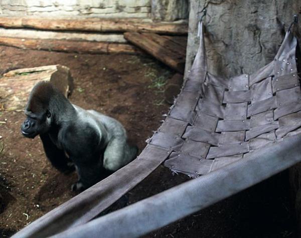 M'Tonge ma zimą nową rozrywkę – bujanie w hamaku