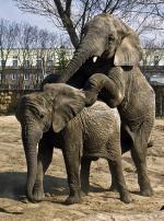 Słoniarnia przejdzie metamorfozę. Latem usiądziemy na tarasie