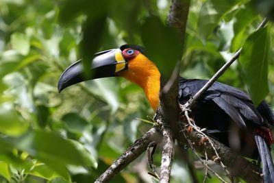 W Ptasim Azylu pomoc otrzyma 2,5 tys. gatunków ptaków