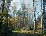 Puszcza Kampinoska to jedyny tak duży kompleks leśny w Europie położony tuż przy stolicy.
