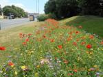 Łąka jest silniej ukorzeniona niż trawnik i bardziej odporna zarówno na podtopienia, jak i długie susze