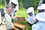 Galeria Solna w Inowrocławiu – w ulach mieszka ponad 150 tysięcy pszczół