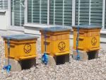 Pszczoły mieszkają  też na dachu gdańskiej Galerii Madison